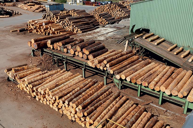 Production de bois Français